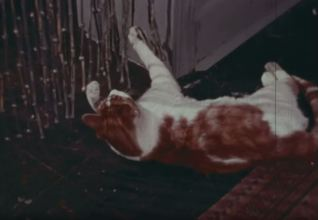 Alfred the Cat sees an untimely end as a result of the carelessness of FBI agents in Stay Alert, Stay Alive.