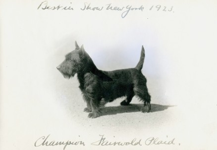 Scottish Terrier (17-HD-U002)