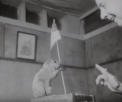 Sousa, the patriotic squirrel.