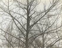Women's Camouflage Reserve Corps studying anti-detection methods, camouflaged among the branches at Van Cortlandt Park, New York. Local ID: 165-WW-599G-30.