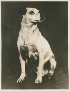 "Original Caption: ""Igloo"" Admiral Byrd's dog, which has been to both ends of the Earth. Local identifier: XEJD-DE-02-02-11"